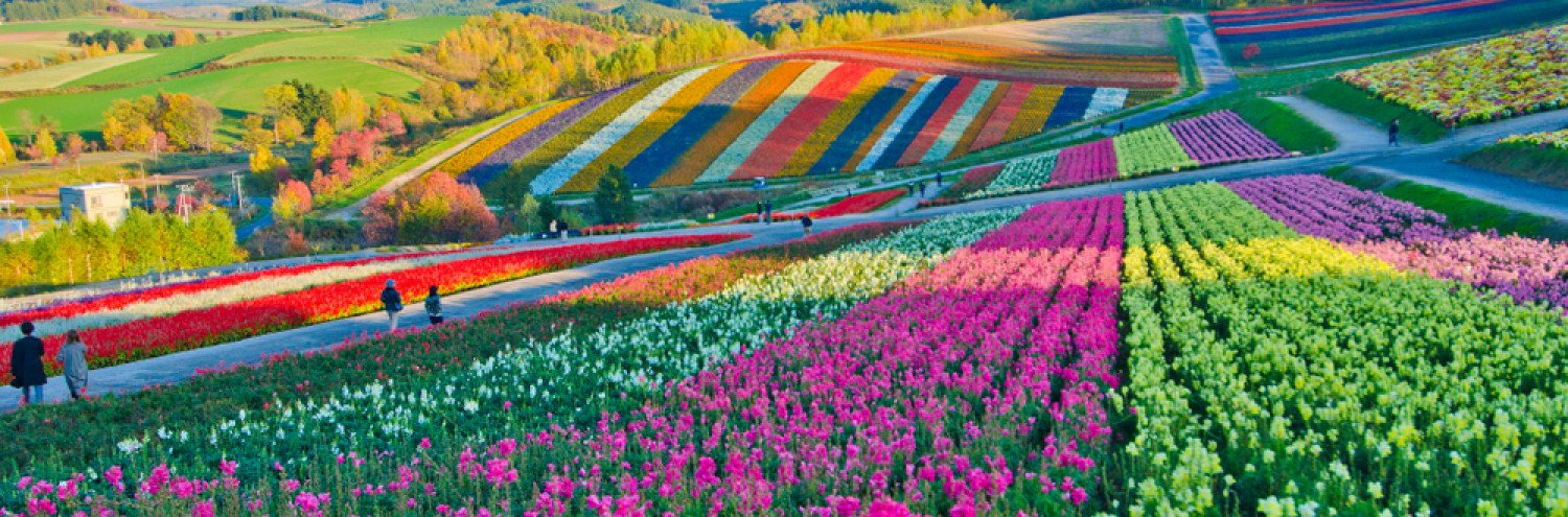Flowers in Japan: Where You Can See Flowers at Any Season