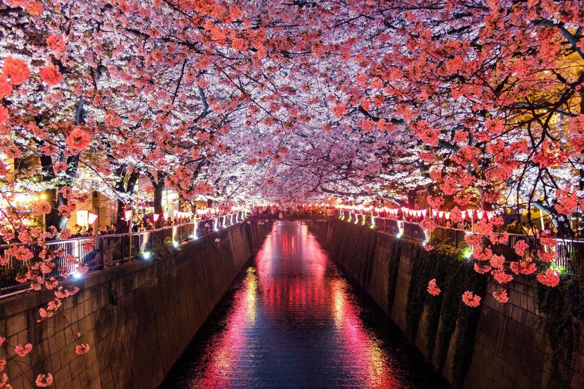 Ephemeral Sakuras