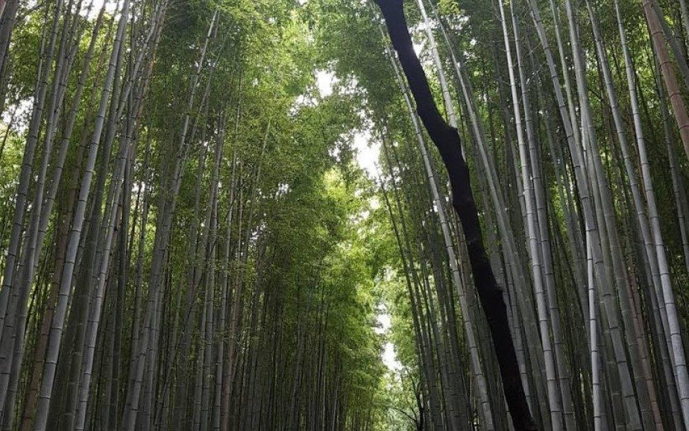 Japan: Kyoto
