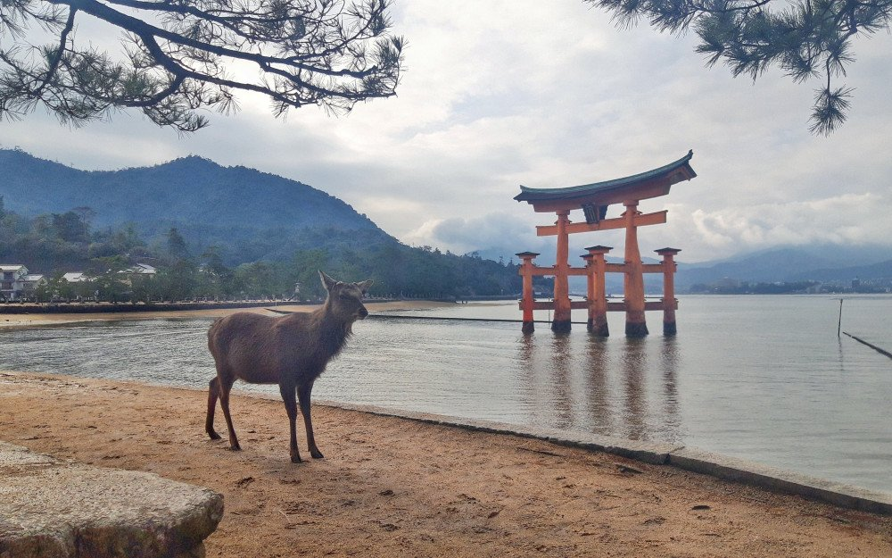 Japan Travel: Unusual Cities You Should Never Miss In Japan