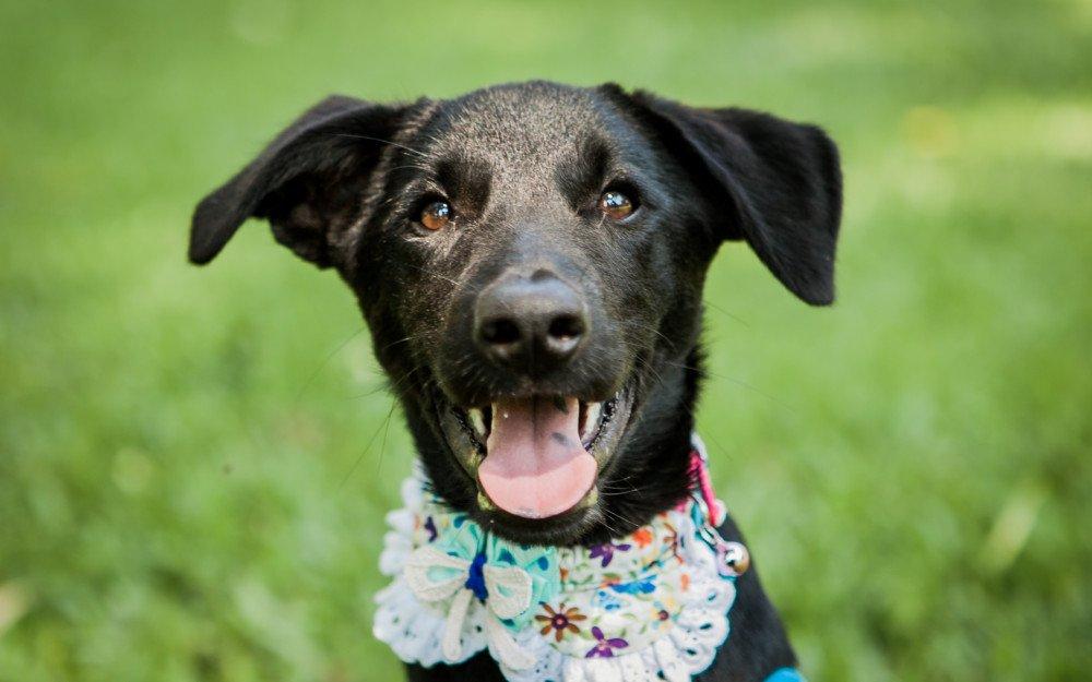 Adopt-A-Pet: Eve's Dog Adoption Taiwan